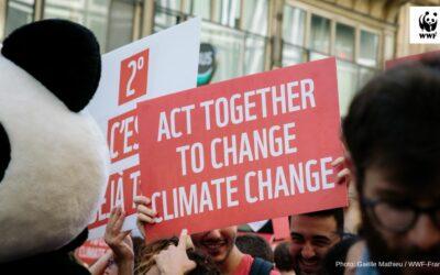"""WWF zum EU-Klimapaket: """"Zu wenig und zu spät"""""""