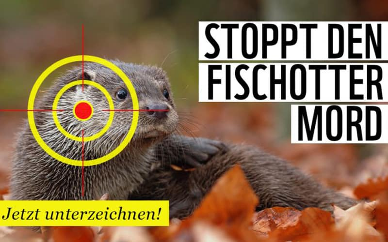 Petition: Stoppt Fischotter Mord