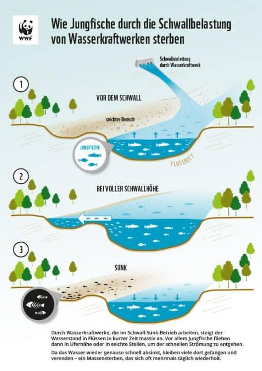 Grafik: Auswirkungen Schwall und Sunkbetrieb