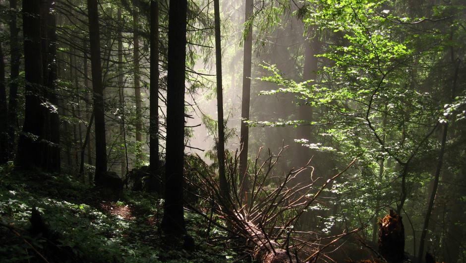 Wildnis im Karwendel