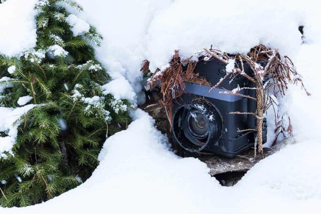 Einsatz einer von Schnee bedeckten Wildtierkamera