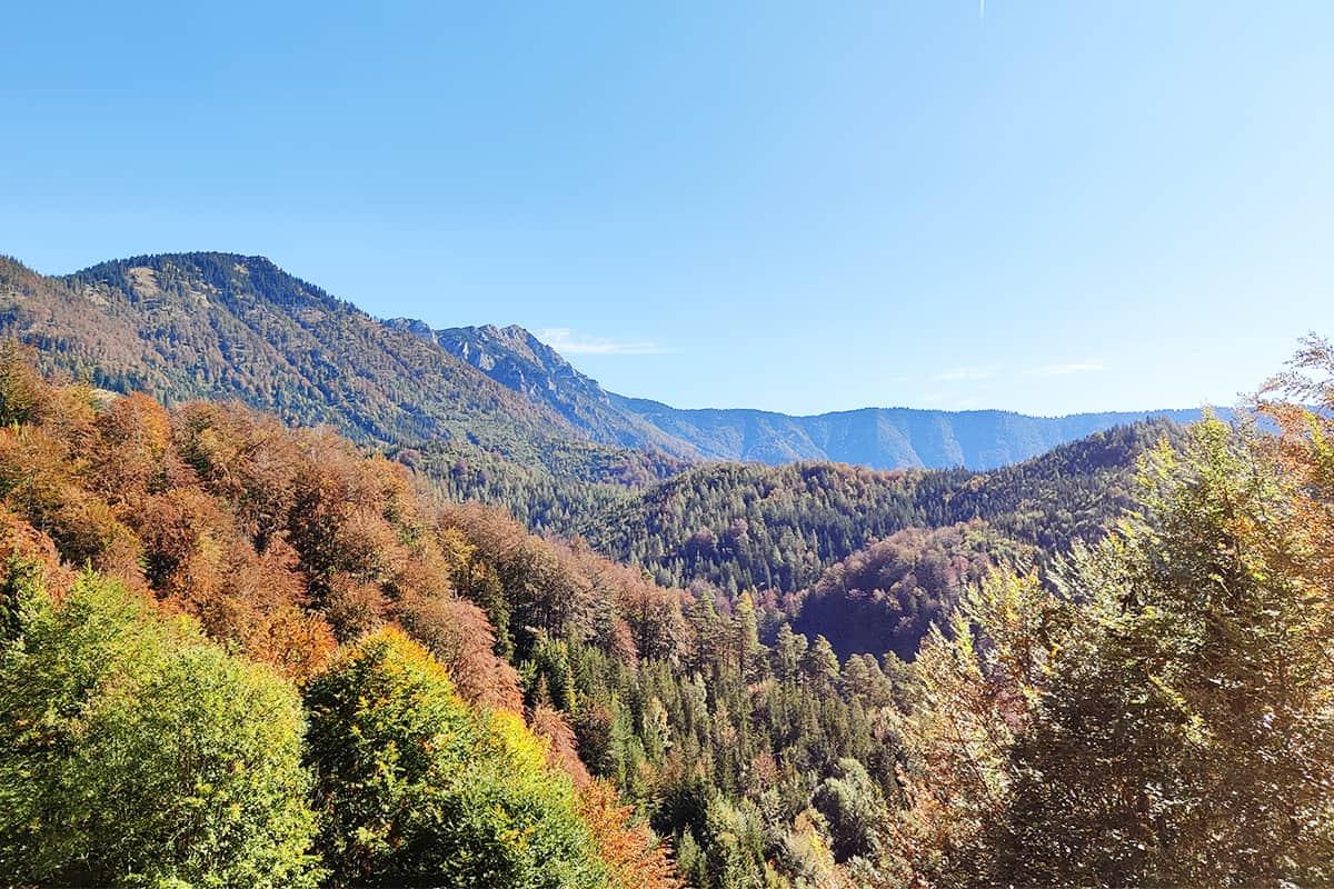 ÖfB - naturnahe Wälder im österreichischen Alpenvorland