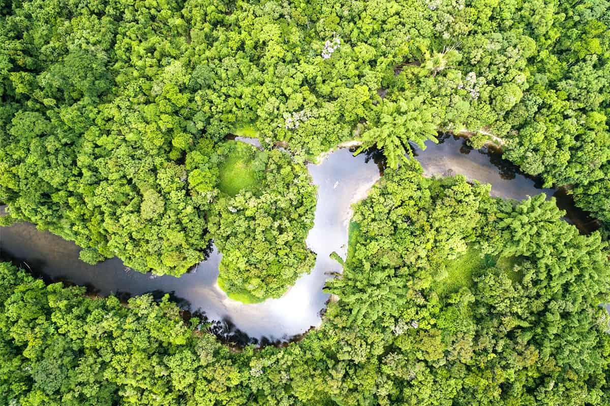 Bank Austria - Regenwald Fluss in Brasilien