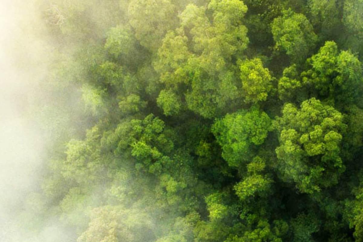Luftaufnahme des Regenwalds in der Bukit Tigapuluh Landschaft, Sumatra