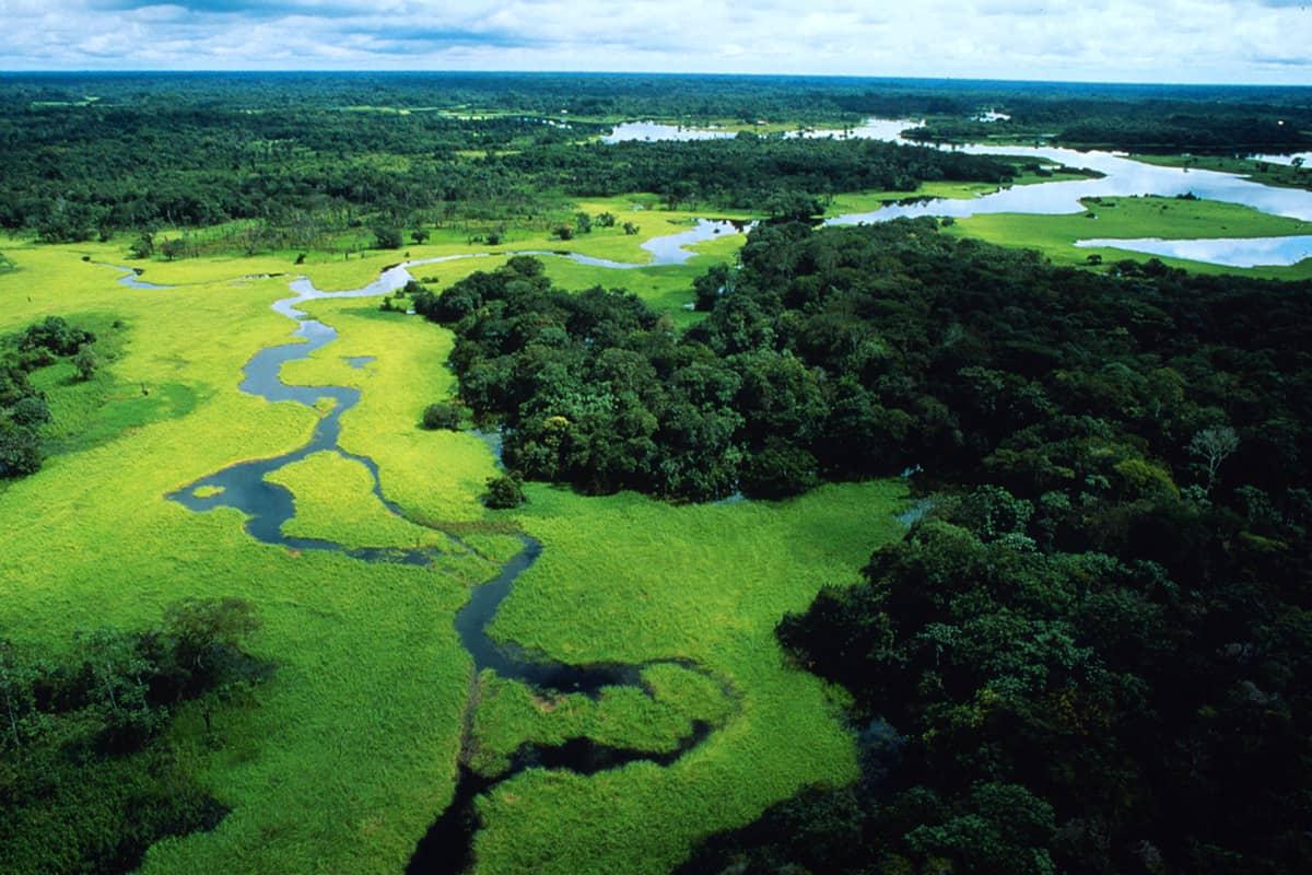 Regenwald überschwemmt in der Regenzeit