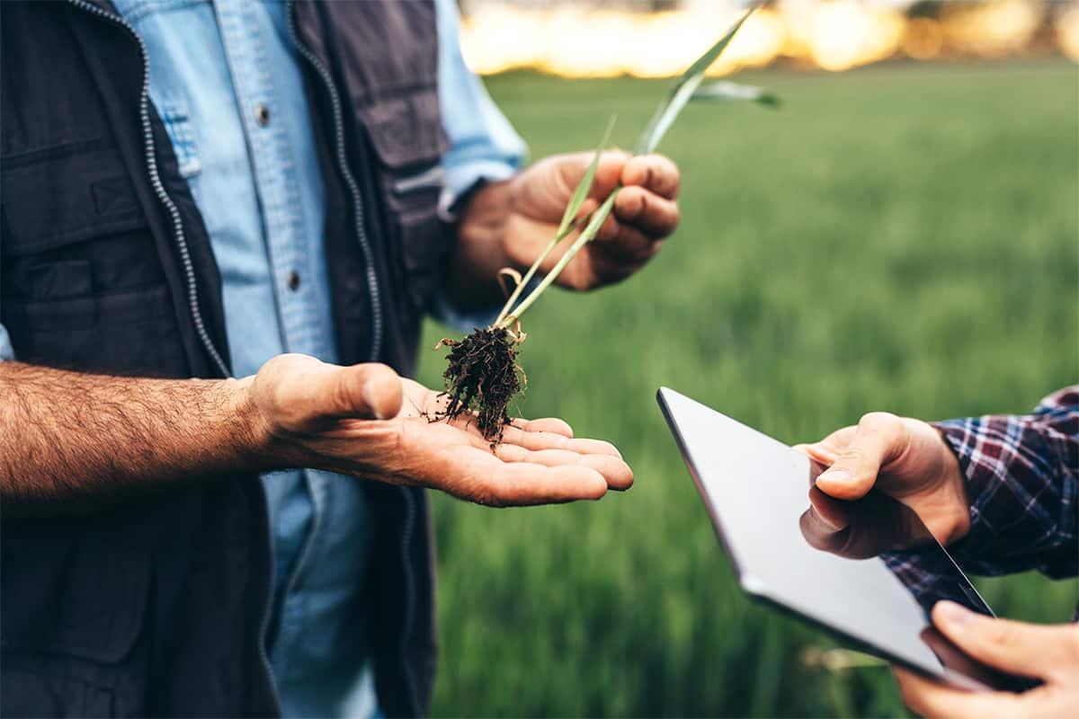 Close-up eines Mannes, der eine Pflanze hält