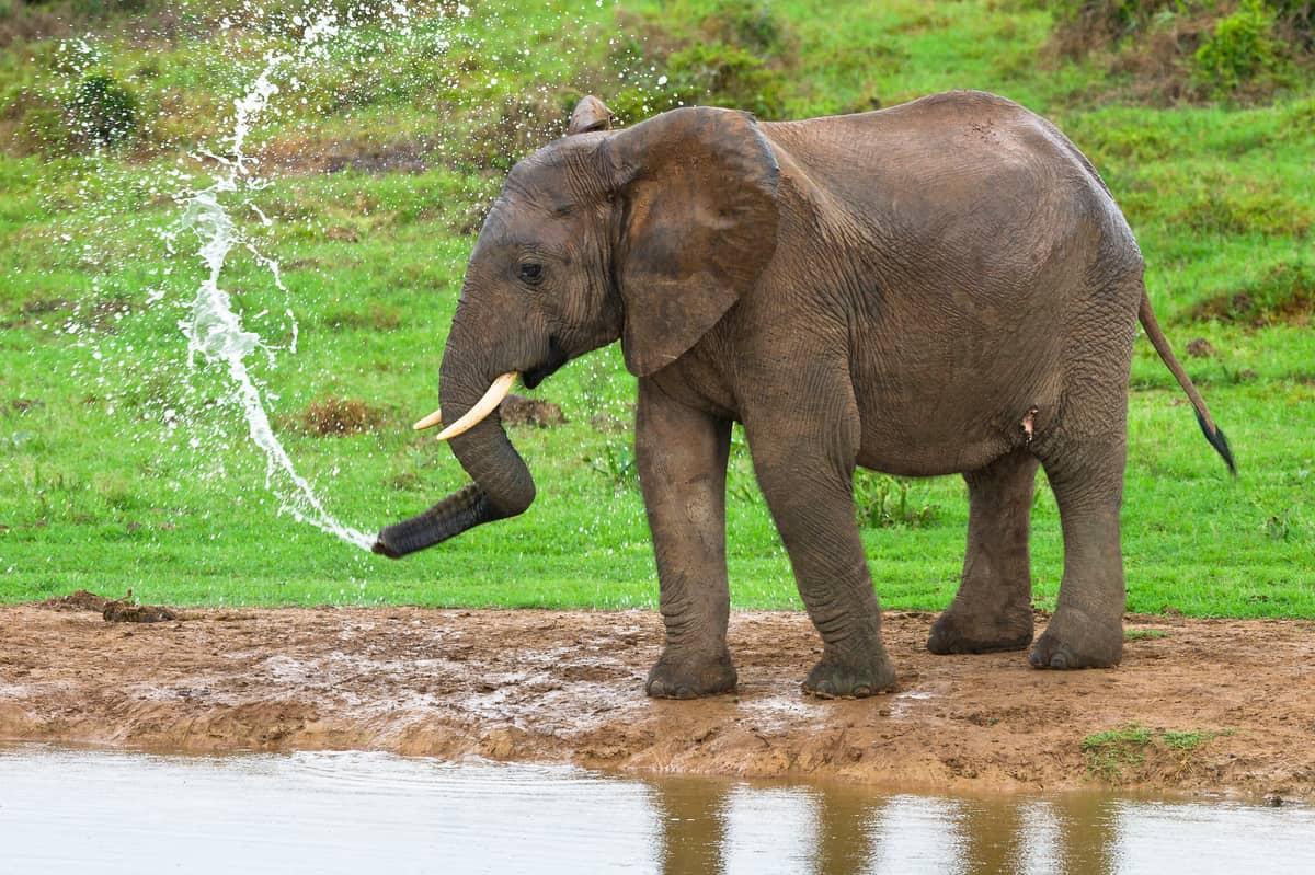 Eine angenehme Dusche, © by P.Chadwick/WWF