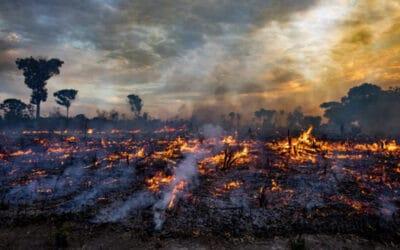 Mit Aufschwung droht Öko-Kollaps: Welterschöpfungstag am 29. Juli