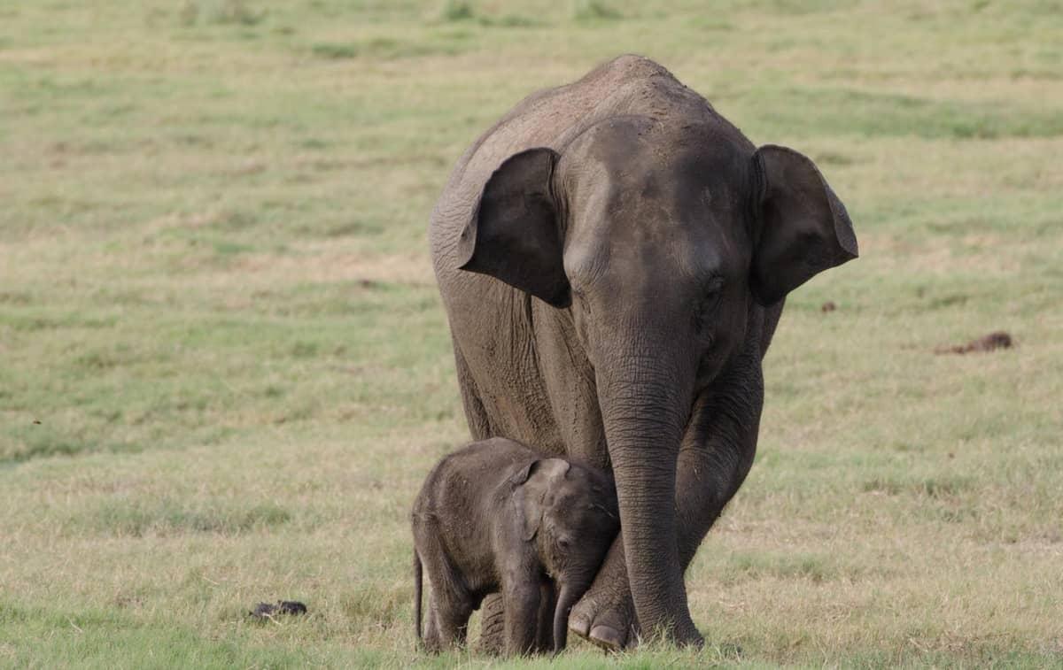 Elefantenkuh mit Junges © Christina Mullin