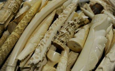 WWF warnt vor tierischen Souvenirs im Urlaub