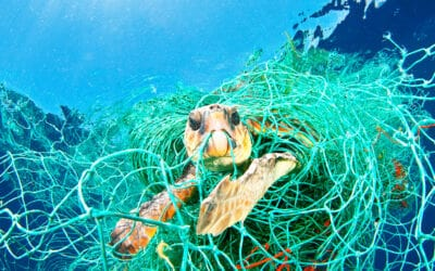 WWF jagt Geisternetze im Mittelmeer