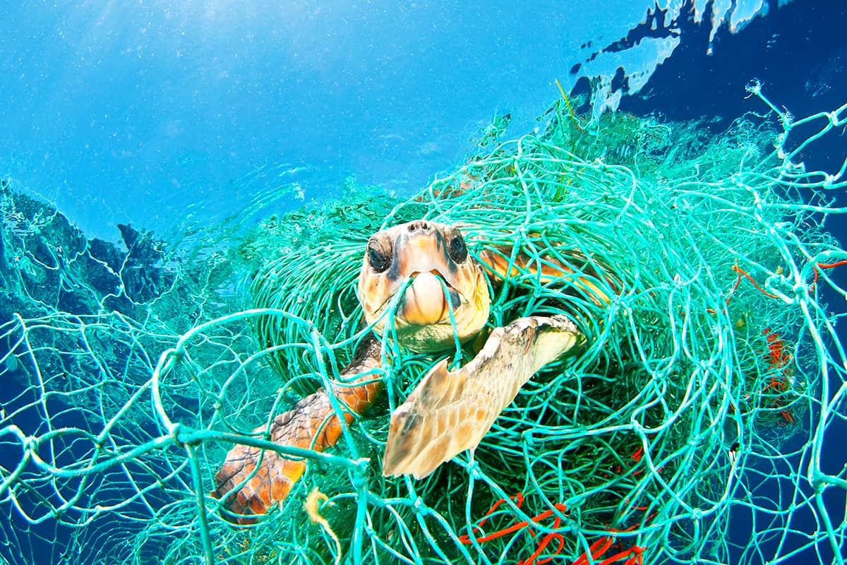Schildkröte gefangen in einem Geisternetz Ⓒ naturepl.com / Jordi Chias / WWF