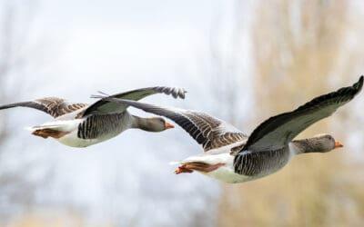 Wenn Vögel auf große Reise gehen: Heute ist Welt-Zugvogeltag!