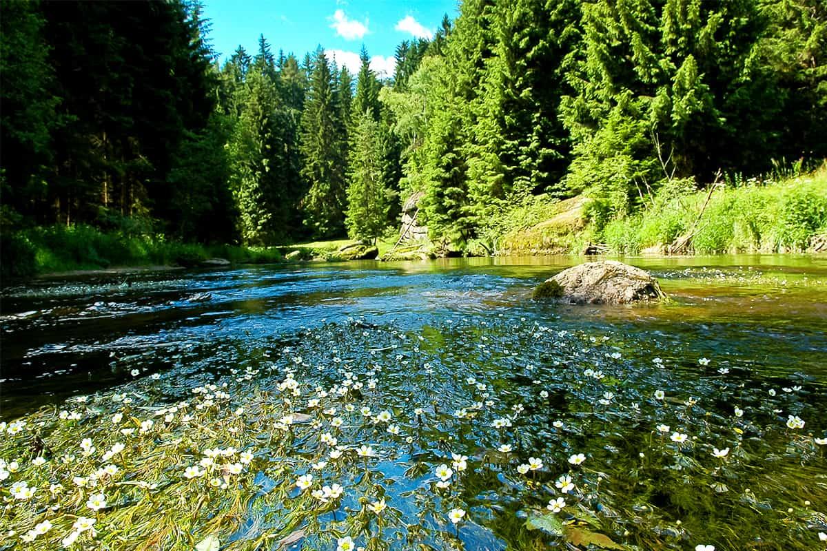 Kamp – Natur und See
