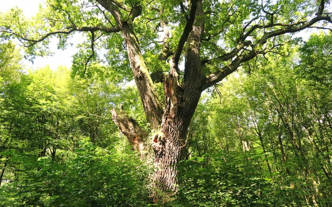 WWF fordert Maßnahmenpaket für zukunftsfitte Wälder