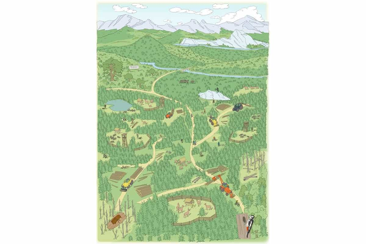 Grafik aktuelle Situation der Wälder