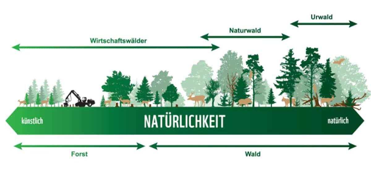 Natürlichkeit der Wälder
