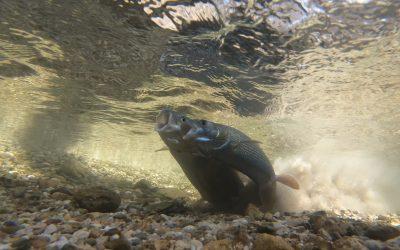 """Premiere von """"Was Fische Wollen"""" beim Innsbruck Nature Film Festival"""