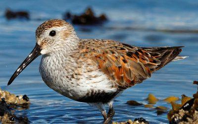 Weltzugvogeltag – WWF warnt vor Verlust wichtiger Rastplätze wegen Trockenheit