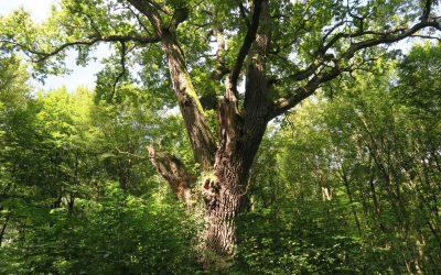 Leben auf kleinstem Raum: Biotopbäume als Hotspot der Biodiversität
