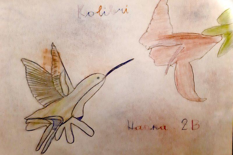 Hanna und ihr Kolibri © privat