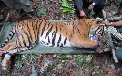Wildtier-Kriminalität: Dominic Thiem und WWF schlagen Alarm